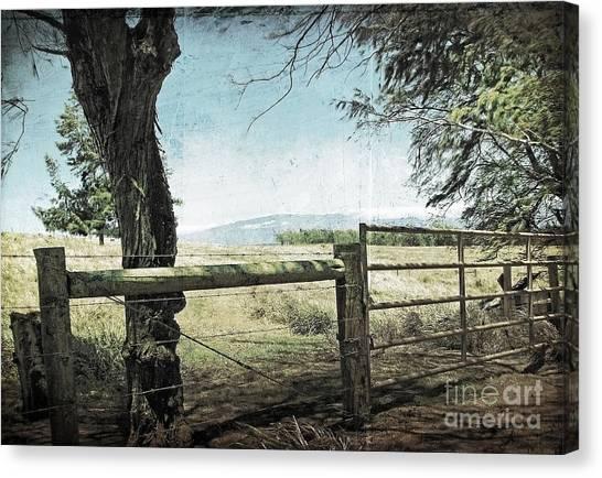 Kohala Ranch Canvas Print by Ellen Cotton