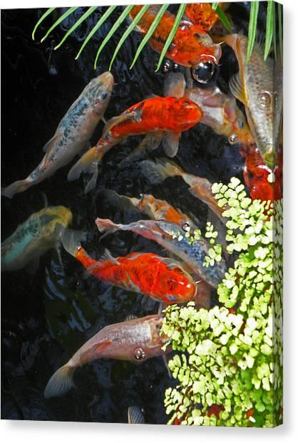 Koi Fish I Canvas Print by Elizabeth Hoskinson