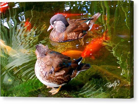 Koi Pond Ducks Canvas Print