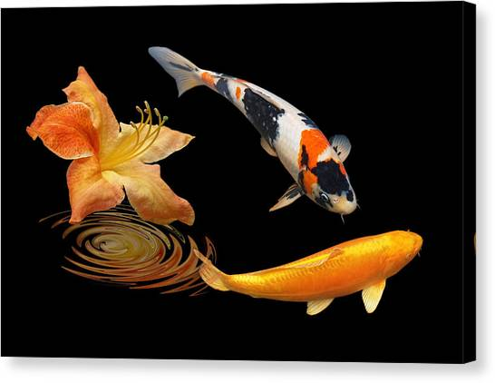 Koi With Azalea Ripples Canvas Print