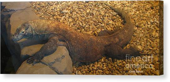 Komodo Canvas Print by Greg Patzer