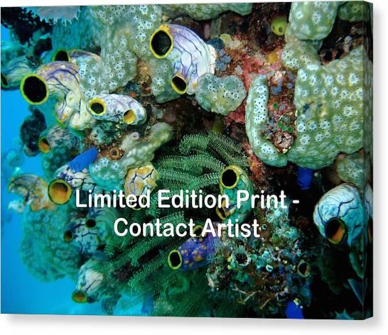 Komodo Island 5 Canvas Print