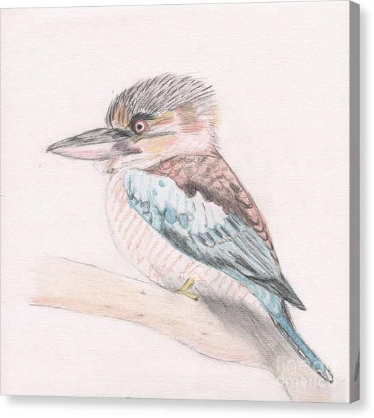 Kookaburra Cuteness Canvas Print