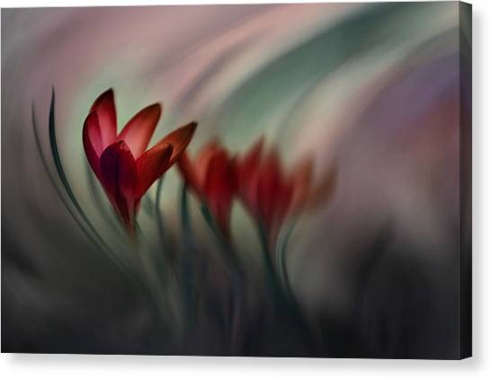 Distort Canvas Print - Krokus by Doris Reindl