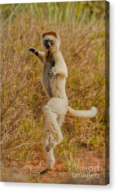 Kung Fu Canvas Print - Kung Fu Lemur by Ashley Vincent