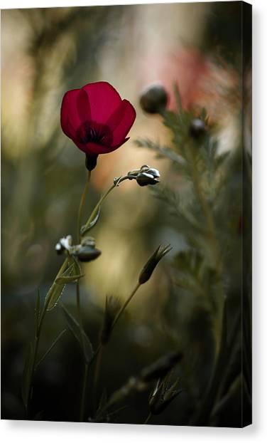 Romantic Flower Canvas Print - La Bailarina De Flamenco by Fabien Bravin
