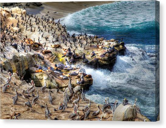 La Jolla Cove Wildlife Canvas Print