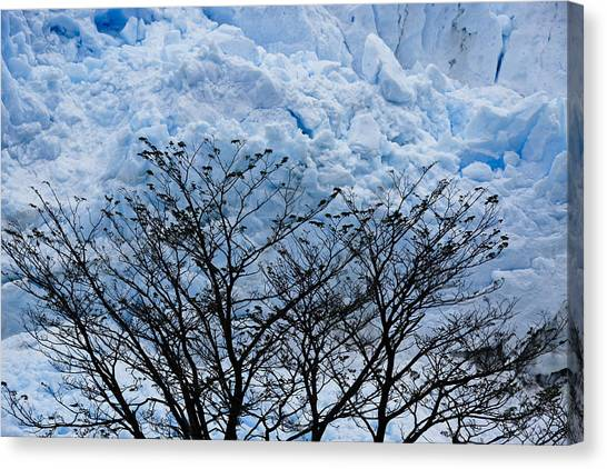 Perito Moreno Glacier Canvas Print - Lace On Blue by Michele Burgess