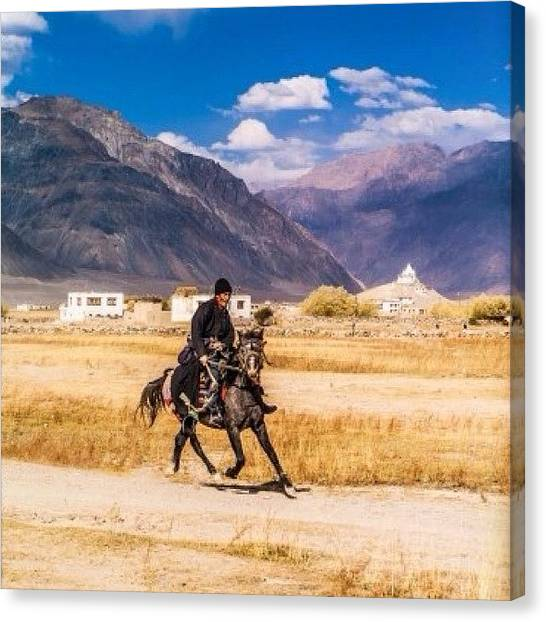 Race Horses Canvas Print - Ladakh Kashmir Region, Zanskar by Aleck Cartwright