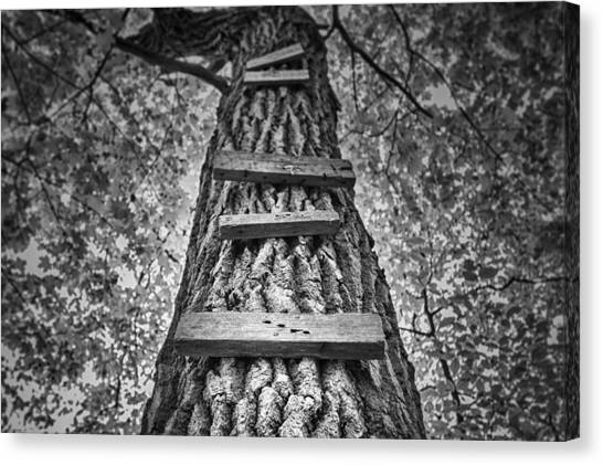 Maple Trees Canvas Print - Ladder To The Treehouse by Scott Norris