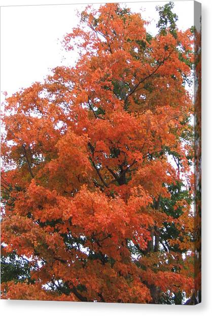 Lady Autumn - Tree Canvas Print by Margaret McDermott