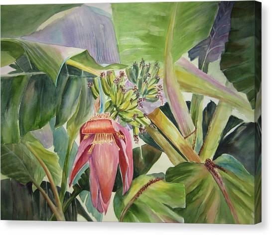 Lady Fingers - Banana Tree Canvas Print