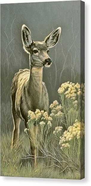 Mule Deer Canvas Print - Lady by Paul Krapf