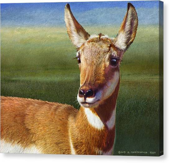 Lady Pronghorn Canvas Print by R christopher Vest