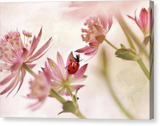Bug Canvas Print - Ladybird And Pink Flowers by Ellen Van Deelen