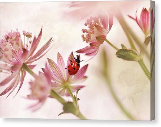 Ladybugs Canvas Print - Ladybird And Pink Flowers by Ellen Van Deelen