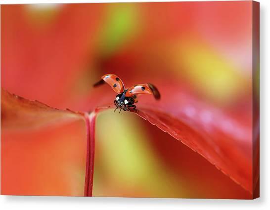 Flight Canvas Print - Ladybird In Autumn by Ellen Van Deelen