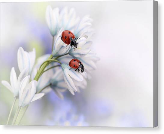 Holland Canvas Print - Ladybirds by Ellen Van Deelen
