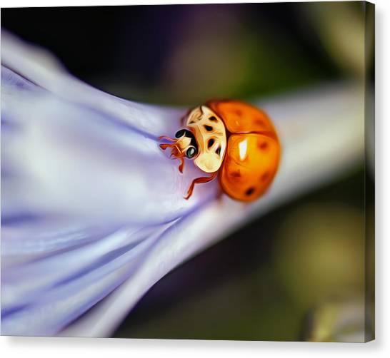 Ladybug Art Canvas Print by Tammy Smith