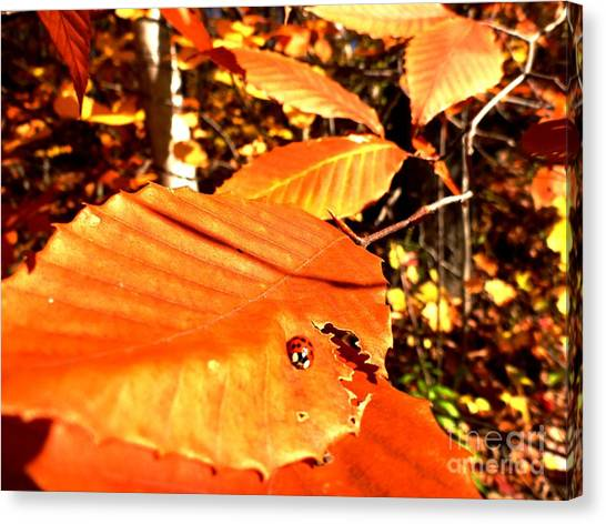 Ladybug At Fall Canvas Print