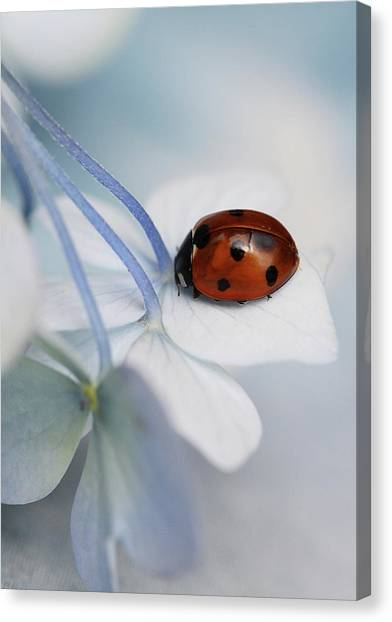 Holland Canvas Print - Ladybug by Ellen Van Deelen