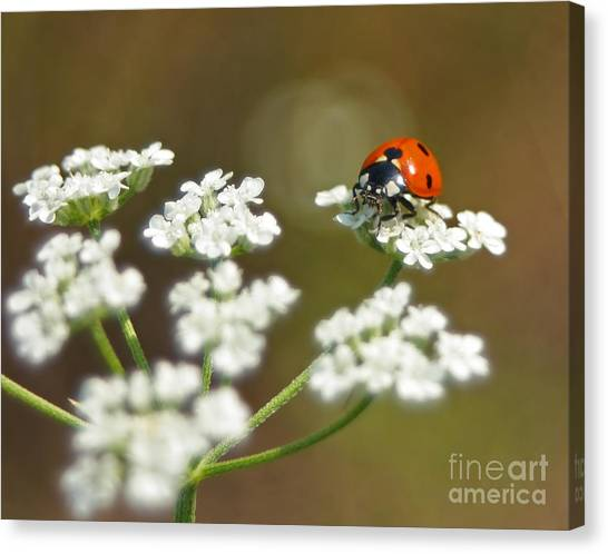 Ladybug In White Canvas Print