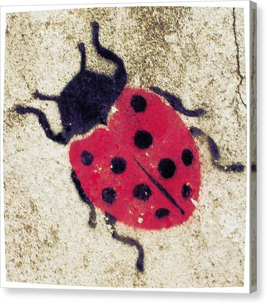 Ladybugs Canvas Print - #ladybug #life #love #spring #tattoos by Juan Parafiniuk
