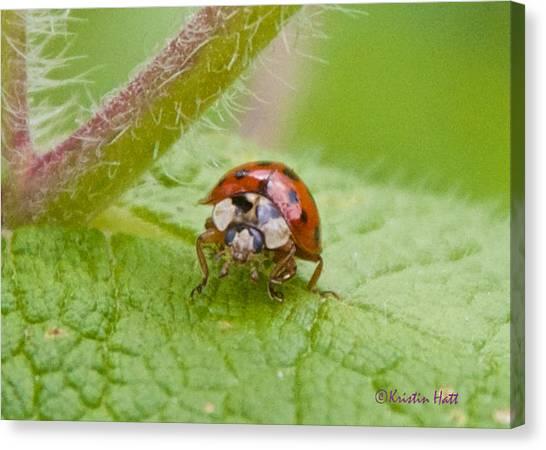 Ladybug On Boneset Leaf Canvas Print