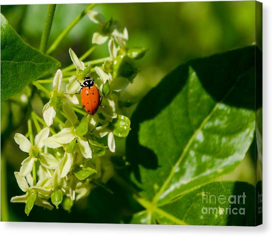 Ladybug On Flowers Canvas Print