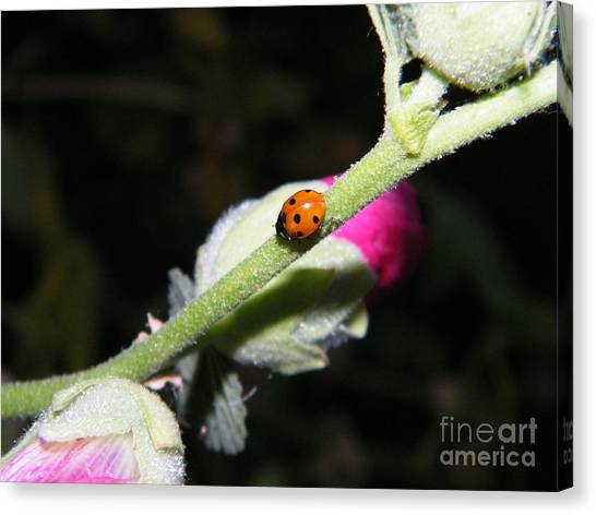 Canvas Print featuring the photograph Ladybug Taking An Evening Stroll by Ann E Robson