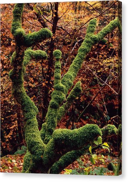 Lael Forest Garden 1 Canvas Print