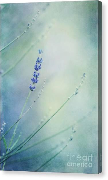 Blossom Canvas Print - Laggard by Priska Wettstein
