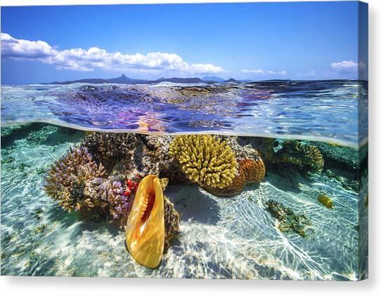 Coral Reefs Canvas Print - Lagoon Life by Barathieu Gabriel