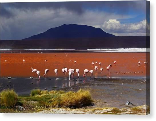 Bolivian Canvas Print - Laguna Colorada by FireFlux Studios