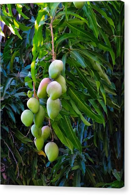 Mango Tree Canvas Print - Lahaina Mango 1 by Dawn Eshelman