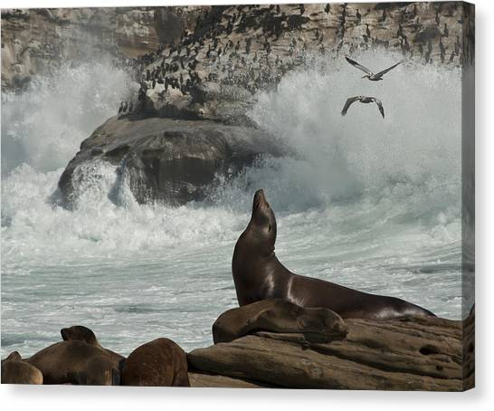 Lajolla Surf N Nature Preserve Canvas Print