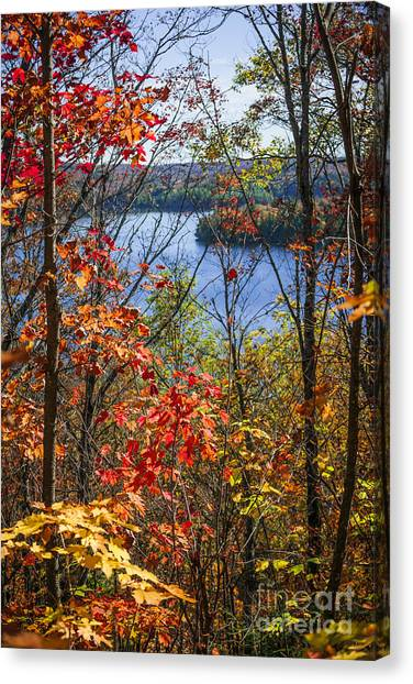 Algonquin Park Canvas Print - Lake And Fall Forest by Elena Elisseeva