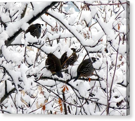 Lake Country Quail Canvas Print