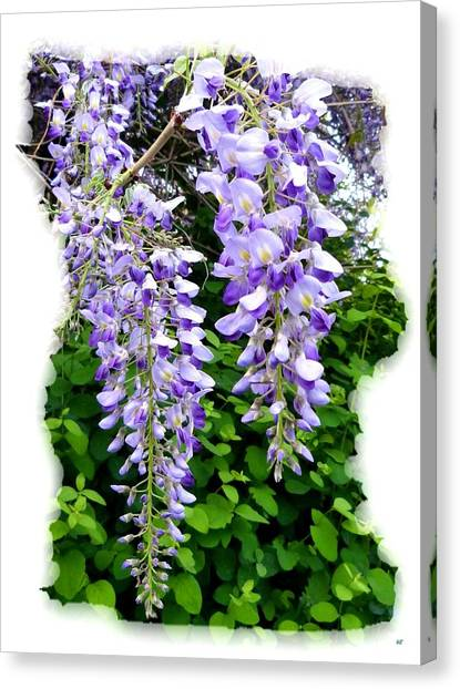 Lake Country Wisteria Canvas Print