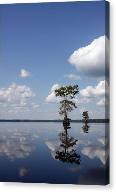 Great Dismal Canvas Print - Lake Drummond by Debby Zimmerman