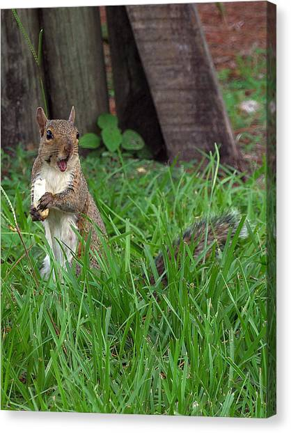 Lake Howard Squirrel 000 Canvas Print by Chris Mercer