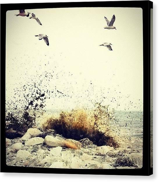Seagulls Canvas Print - Lake Michigan Melting by Zarah Delrosario