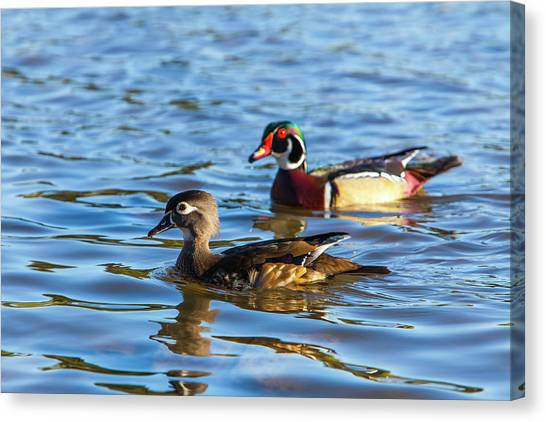 Wood Duck Canvas Print - Lake Murray San Diego by Michael Qualls