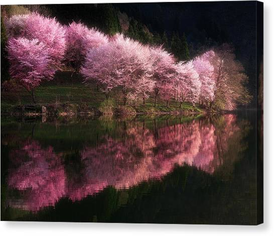 Cherries Canvas Print - Lake Nakatsuna With Cherry Blossoms by Ace