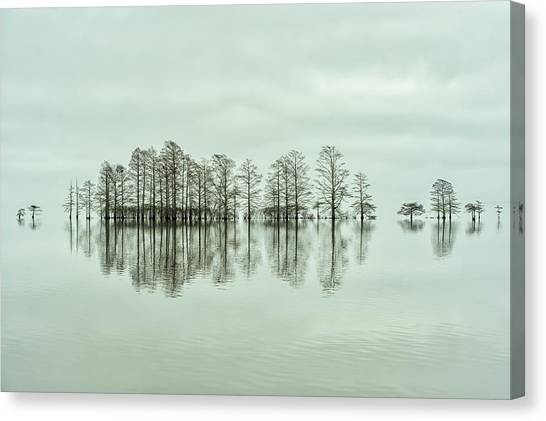 Cypress Canvas Print - Lake-shore Lineup Beauty by Liyun Yu