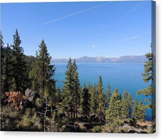 Lake Tahoe Through The Trees Canvas Print