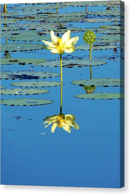 Lake Thomas Water Lily Canvas Print