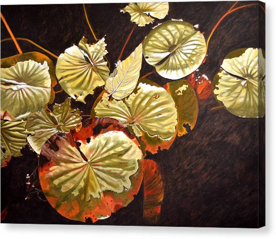 Lake Washington Lily Pad 11 Canvas Print