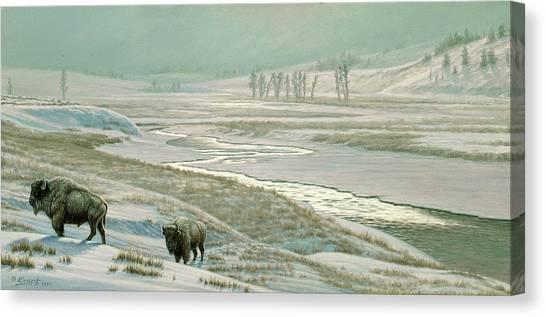 Buffaloes Canvas Print - Lamar Valley - Bison by Paul Krapf