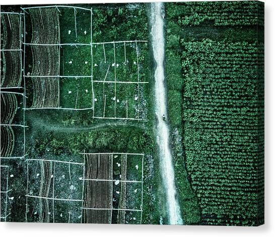 Land Of Idyllic Beauty Canvas Print by Zhou Chengzhou